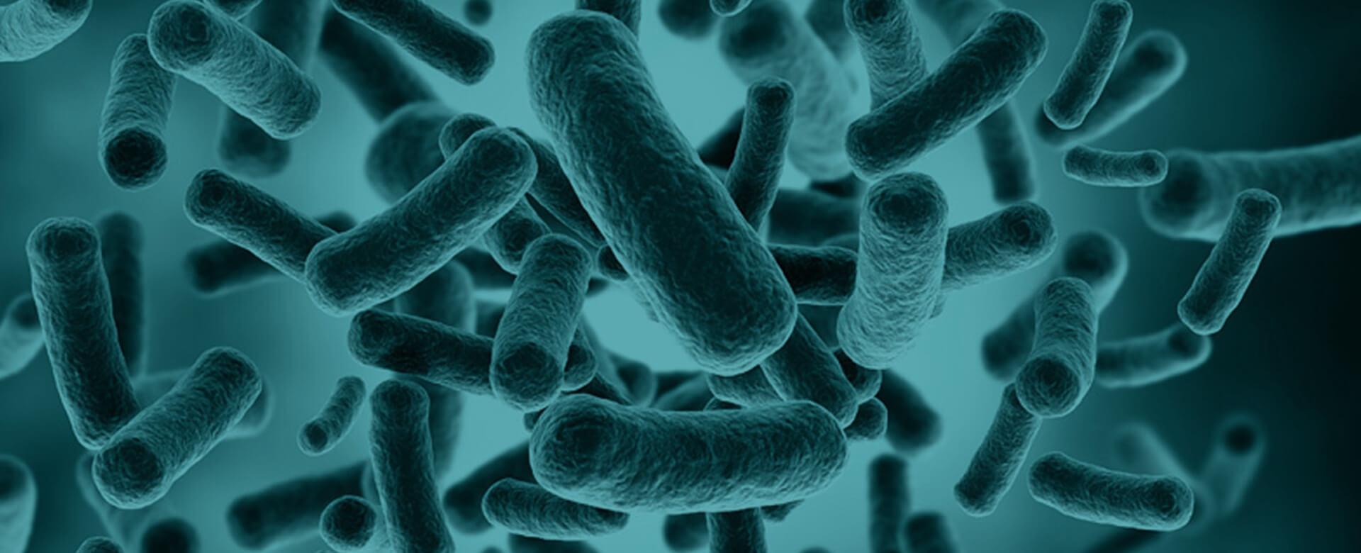 Analisi del microbioma, una nuova arma contro l'invecchiamento
